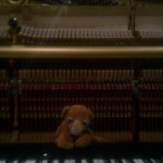 Boo on the piano.